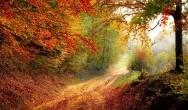 Autumn Short Breaks